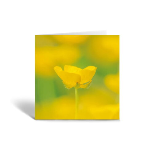Orange Fig Buttercup Greetings Card Front
