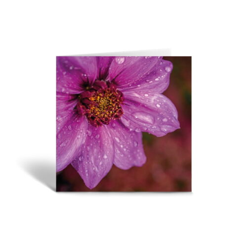 Orange Fig Raindrops on Red Greetings Card Front