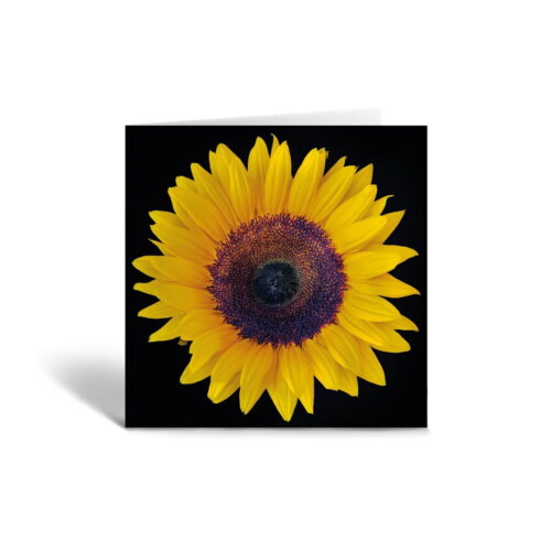 Orange Fig Smiling Sunflower Greetings Card Front