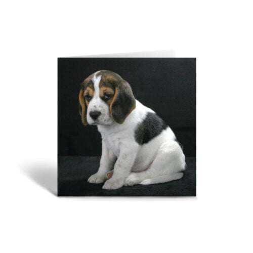 Orange Fig Beagle Puppy Greetings Card Front