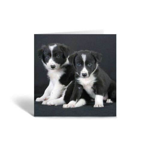 Orange Fig Collie Puppies Greetings Card Front