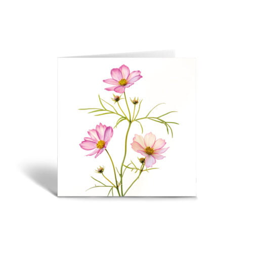 Orange Fig Cosmos Greetings Card Front
