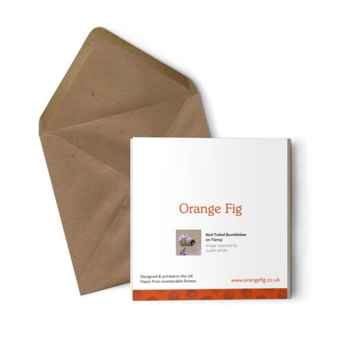 Orange Fig Red Tailed Bumblebee Greetings Card Back