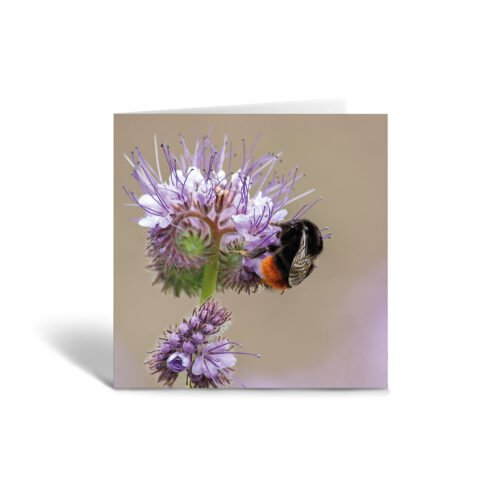 Orange Fig Red Tailed Bumblebee Greetings Card Front