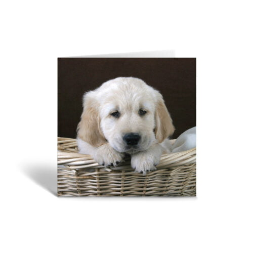 Orange Fig Retriever Puppy Greetings Card Front