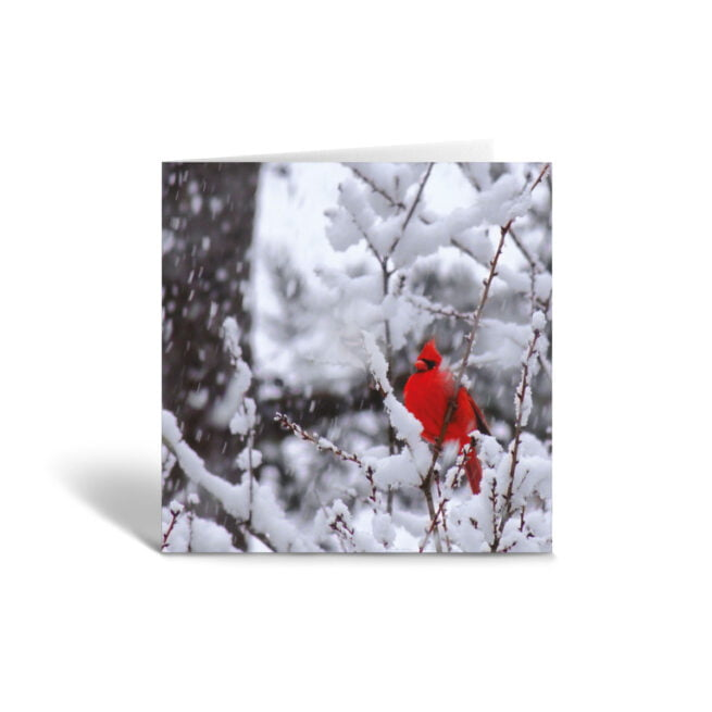 Orange Fig Cardinal in the Snow Greetings Card Front