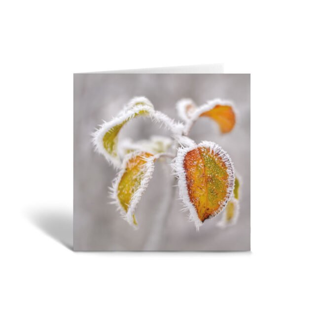 Orange Fig Frosty Leaves Greetings Card Front