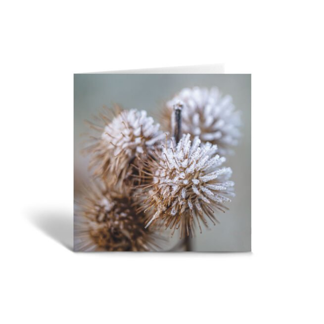 Orange Fig Frosty Seed Heads Greetings Card Front