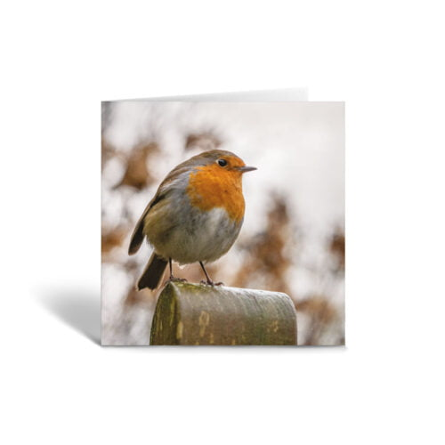 Orange Fig Robin on a Post Greetings Card Front