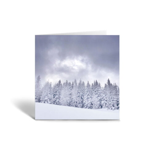 Orange Fig White Winter Greetings Card Front